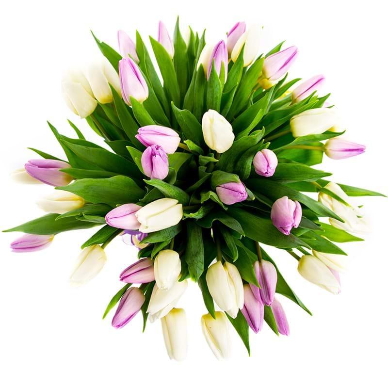 Spedire tulipani bianchi e rosa vista alto