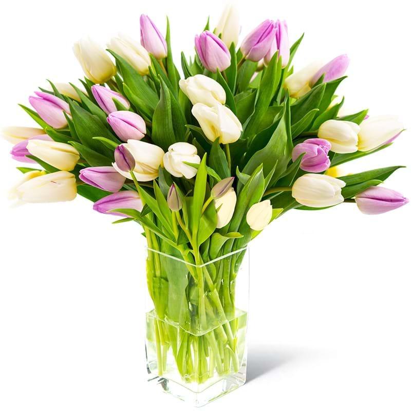 Spedire tulipani bianchi e rosa in vaso
