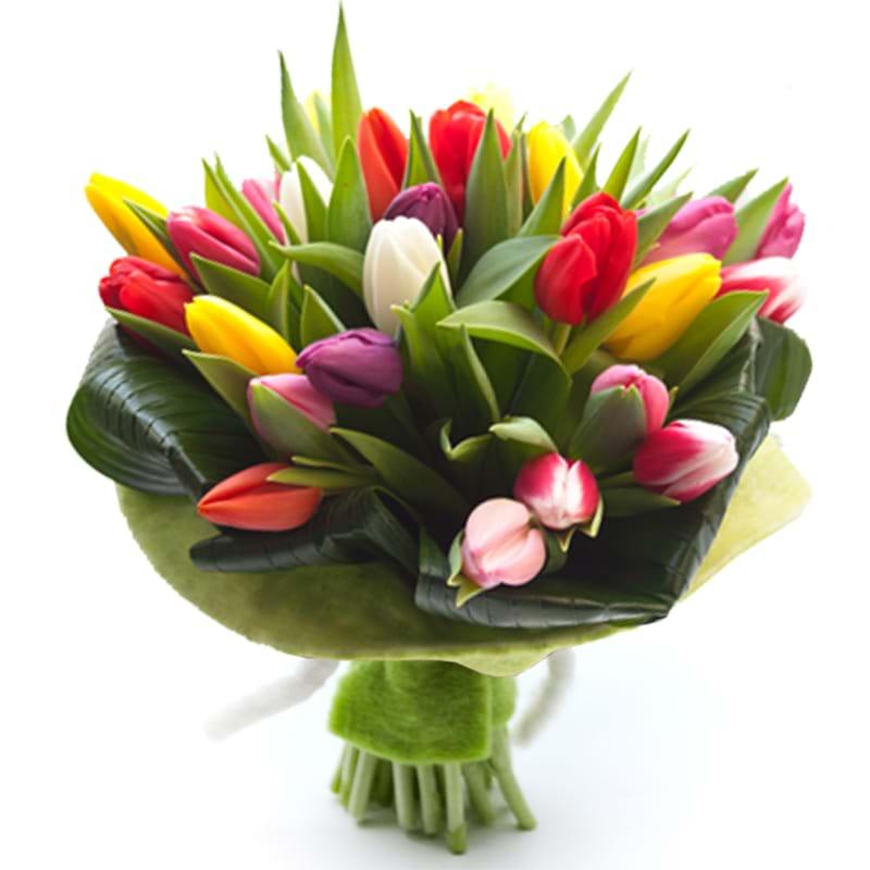 Spedire tulipani colorati
