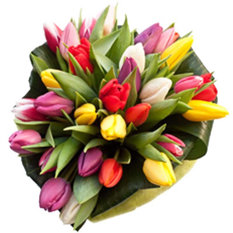 Spedire tulipani colorati vista alto