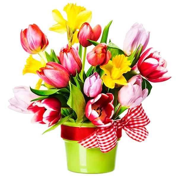 tulipani gioiosi