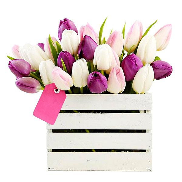 Spedire tulipani in cassetta