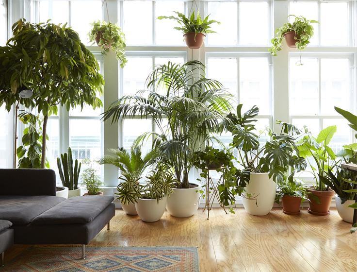 Le piante da interni: quali sono le più resistenti e come ...